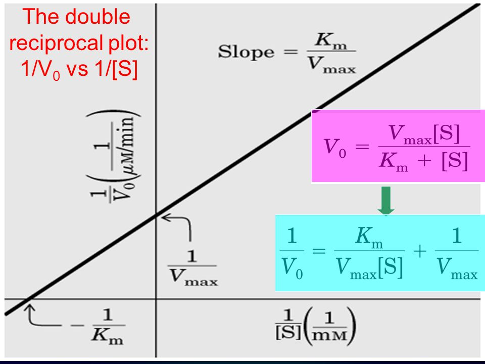 The double reciprocal plot: 1/V0 vs 1/[S]